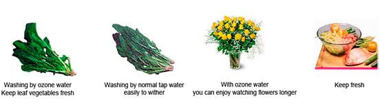 Ozonator Vegetables